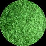 irischgrün